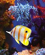 Tropical Fish Metal Prints - Longnose Butterflyfish Metal Print by Amy Vangsgard