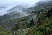 Landscap Framed Prints - Longsheng Rice Terraces Framed Print by Michele Burgess