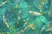 Looe Key Reef Print by Charles Harden