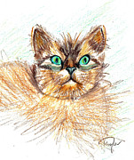 Cats Drawings Originals - Look at Those Eyes by Terry Taylor