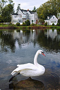 Babylon Village Framed Prints - Look at What the Swan Can Do Framed Print by Vicki Jauron