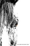 Horse Images Digital Art Prints - Look Deep Print by Ryan Courson