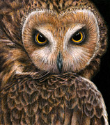 Owls Drawings - Look into my Eyes by Pat Erickson