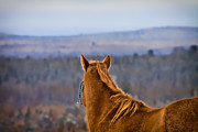 Horse Images Framed Prints - Lookin Out My Backdoor Framed Print by Gary Smith