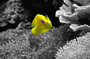 Aquariums Photos - Looking At You by Deniece Platt