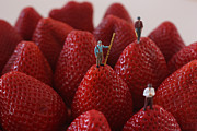 Miniatures Photos - Looking for a Strawberry Hill Thrill by David Bearden