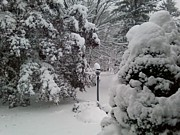 Storm Prints Photos - Looking Out My Front Door by Carol Wisniewski