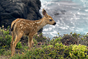Fawn Photos - Looking Out to Sea by TB Sojka