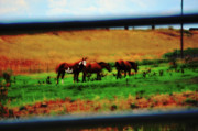 Country Scenes Metal Prints - Looking Through Metal Print by Molly McPherson