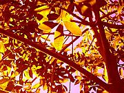 Library Digital Art - Looking Through Tree Leaves 2 by Amy Vangsgard