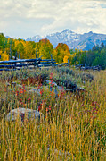 Farm Stand Art - Looking Towards Sneffels by Jennifer Grover