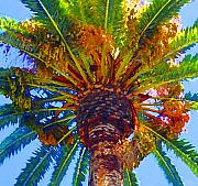 Digital Photograph Digital Art Acrylic Prints - Looking up at Palm Tree  Acrylic Print by Amy Vangsgard