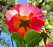 Roses Digital Art Metal Prints - Looking Up at Rose and Tree Metal Print by Amy Vangsgard