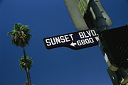 North Framed Prints - Looking Up At Sunset Boulevard Sign Framed Print by Todd Gipstein