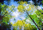 Outdoor Canopy Posters - Looking Up Poster by Darren Fisher
