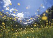 Thru Framed Prints - Looking Up Through Field Of Buttercups Framed Print by Axiom Photographic