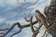 Red-tailed Hawk Paintings - Lookout by Dave Hills