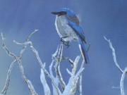 Scrub Jay Paintings - Lookout by William Demboski