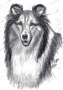 Collie Drawings Posters - Looks Like Lassie Poster by Julie Brugh Riffey