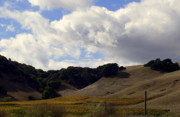 Fall Photographs Posters - Looming Field of Sonoma Poster by Deborah  Crew-Johnson