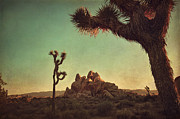 Joshua Tree National Park Framed Prints - Looming Framed Print by Laurie Search