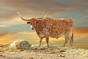 Texas Longhorn Framed Prints - Lord Nelson Framed Print by Robert Anschutz