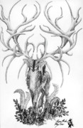 Deer Drawings Posters - Lord of Deer Poster by Morgan Banks