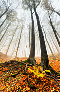 Mist Metal Prints - Lords of the Forest Metal Print by Evgeni Dinev