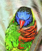 Hawkins Mixed Media - Lorikeet by Eastern Sierra Gallery
