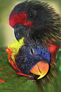Cuddling Posters - Lorikeet Lovers Poster by Michelle Wiarda