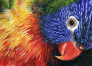Nadi Spencer Metal Prints - Lorikeet Metal Print by Nadi Spencer