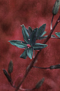 Turquoise And Red Posters - Lost Among Weeds Poster by Bonnie Bruno