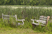 Benches Photo Originals - Lost in the Marsh by Ruth H Curtis