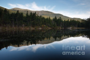 White Mountains New Hampshire Posters - Lost Pond - White Mountains New Hampshire USA Poster by Erin Paul Donovan