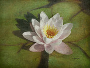 Leaflets Framed Prints - Lotus Blossom Textured Framed Print by Cindy Wright