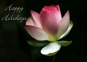 Christmas Cards Art - Lotus Flower Holiday Card by Sabrina L Ryan