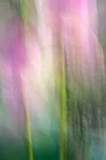 Impressionism Photo Originals - Lotus Flower Impression by Catherine Lau