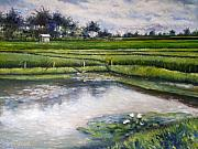 Enver Larney Art - Lotus flowers and rice field Ubud Bali Indonesia 2008  by Enver Larney