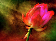 Lotus Prints - Lotus in texture - a present for a friend Print by Rohit Chawla