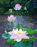 Lotus Pond Paintings - Lotus by John Lautermilch