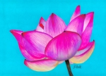 Magenta Drawings Framed Prints - Lotus  Framed Print by Laura Bell