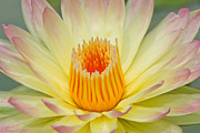 Chatchawin Jampapha - Lotus macro shooting.