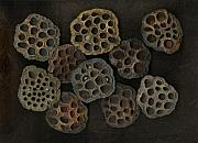 Signed Mixed Media Metal Prints - Lotus Pods Metal Print by Christian Slanec