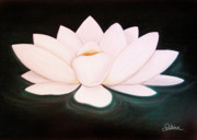 Lotus Flower Photos - Lotus by Sabina Espinet