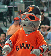 Sf Giants Framed Prints - Lou Seal San Francisco Giants Mascot Framed Print by Tap On Photo