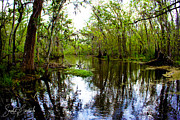Swamp Tour Framed Prints - Louisiana Swamp Tour 3 Framed Print by Sarah Copeland