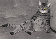 Lounge Cat Print by Joy McKenzie