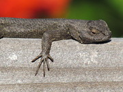 Lounge Photo Originals - Lounge Lizard by John Irons