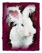 Pets Art Digital Art - Love A Bunny by Terry Mulligan