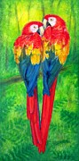 Macaw Art Paintings - Love Birds- Macaw parrots by Sue Halstenberg
